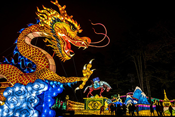 Chinese New Year Dragon for website